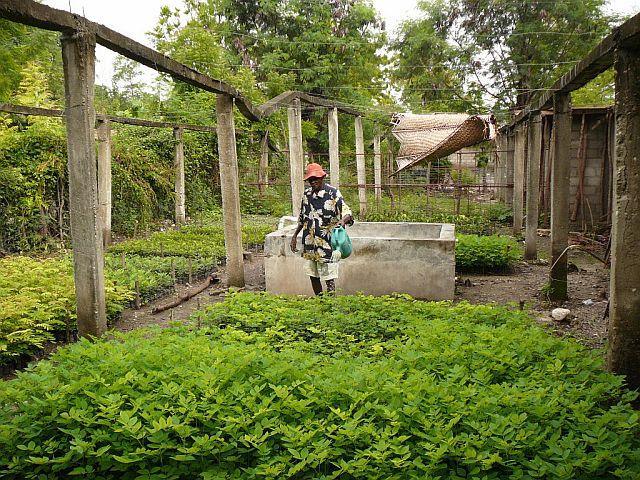 Boomkwekerij van een boerengroep in Desarmes
