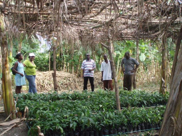 Een boomkwekerij met typische beschaduwing