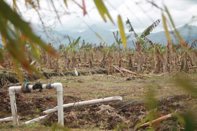 Plantage in verval? Foto Le Nouvelliste