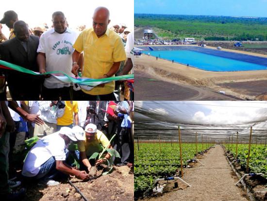 President plant de eerste bananenstruik op 11 oktober 2014 in Trou du Nord (foto Haïti Libre)